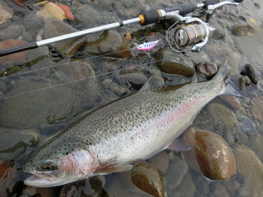 ルアーで釣れた北海道のニジマス