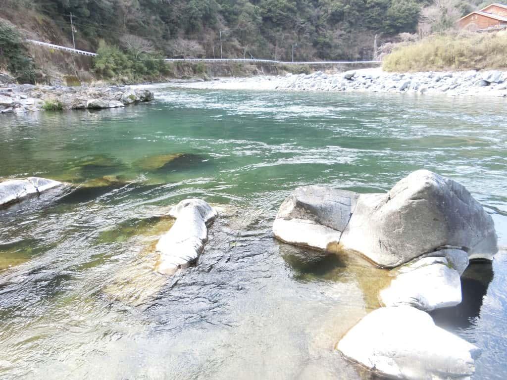 球磨川支流川辺川のヤマメ