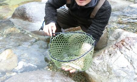 日之影川渓流釣りヤマメ