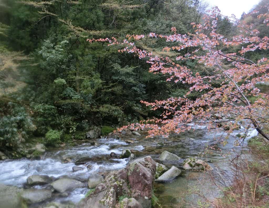 高津川水系福川川