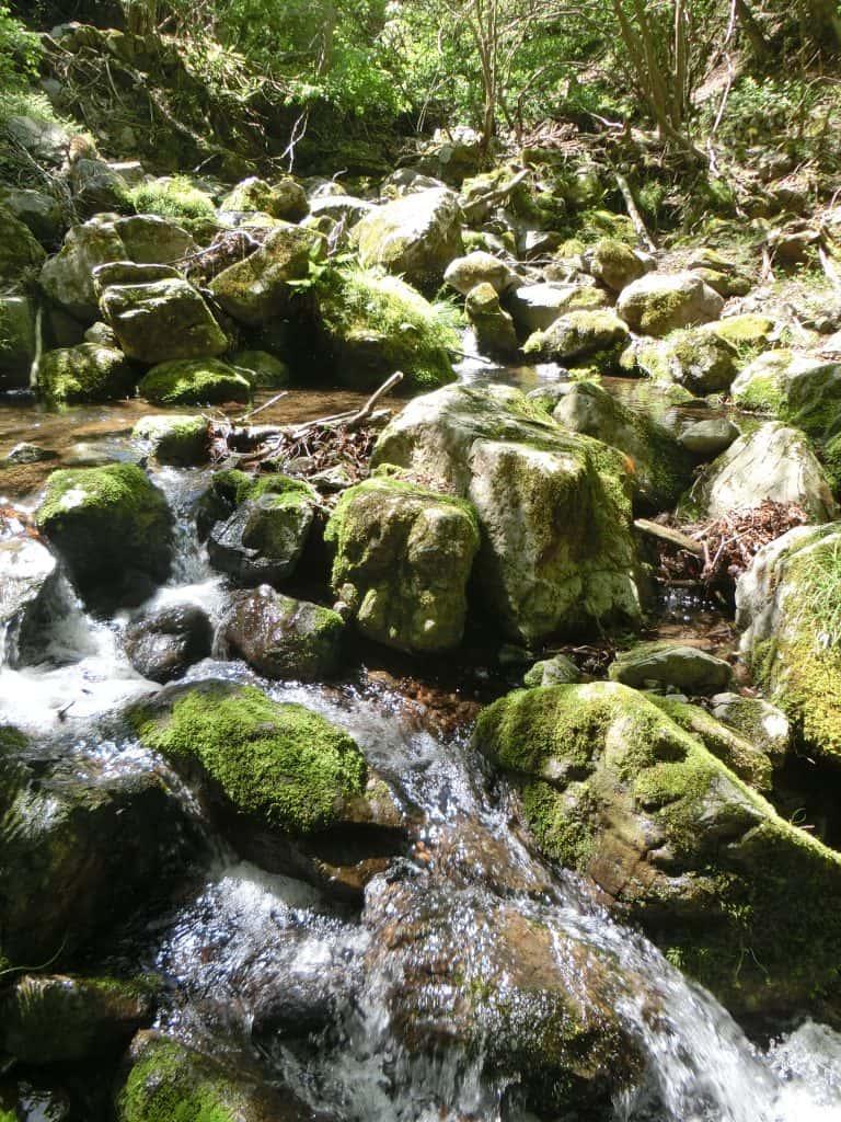 愛知川御池川渓流釣りイワナ