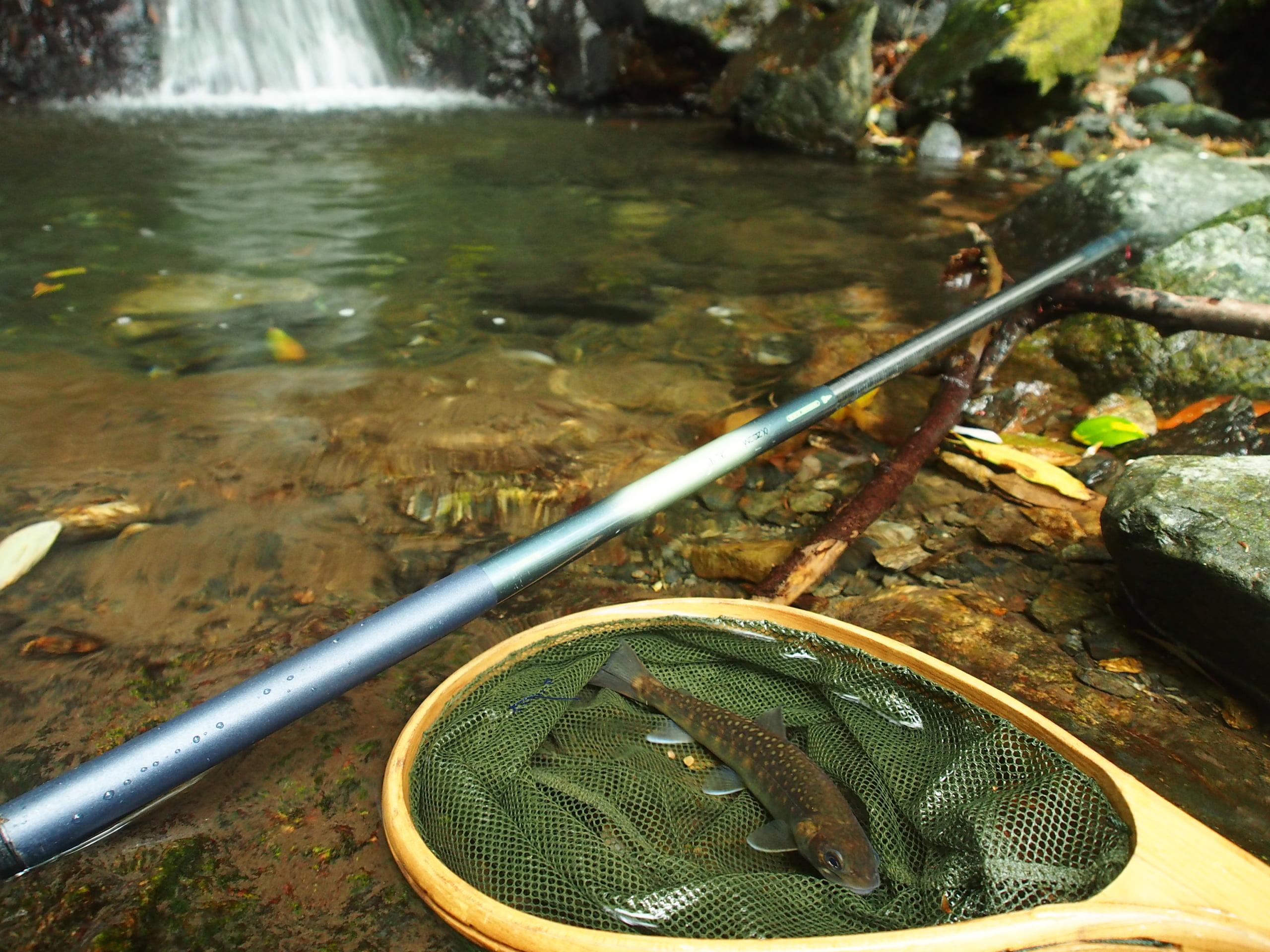 愛知川御池川イワナ・ヤマメ渓流釣り