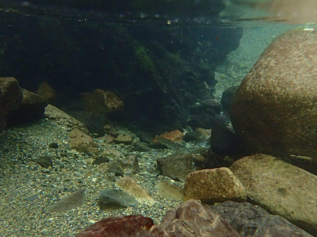 滋賀県犬上川瀬川渓流釣りアマゴ
