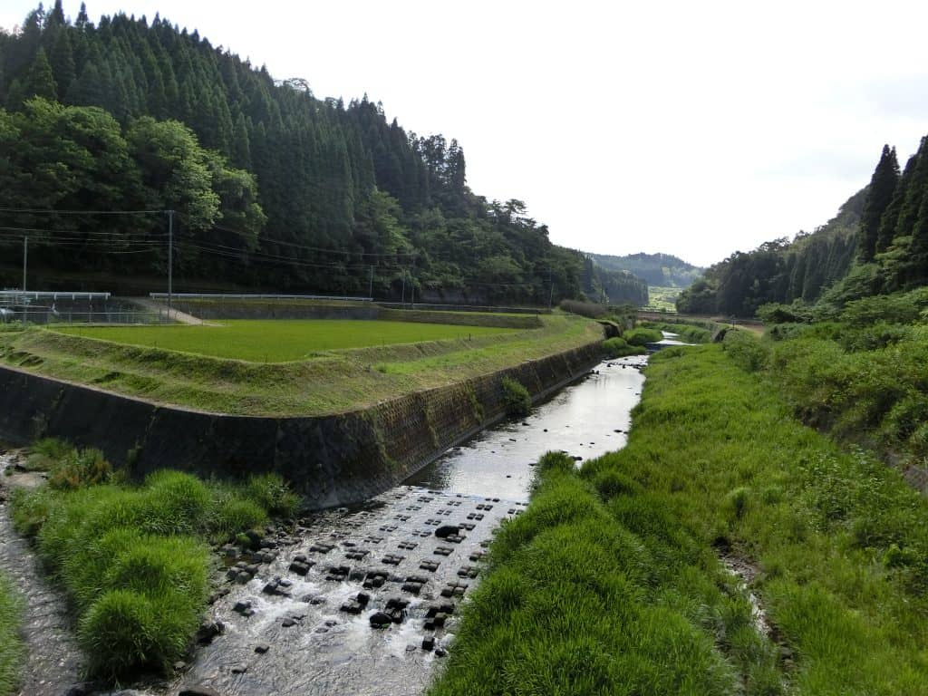 大野川水系玉来川ヤマメ