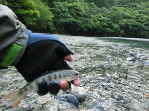 梶原川ヤマメ渓流釣り