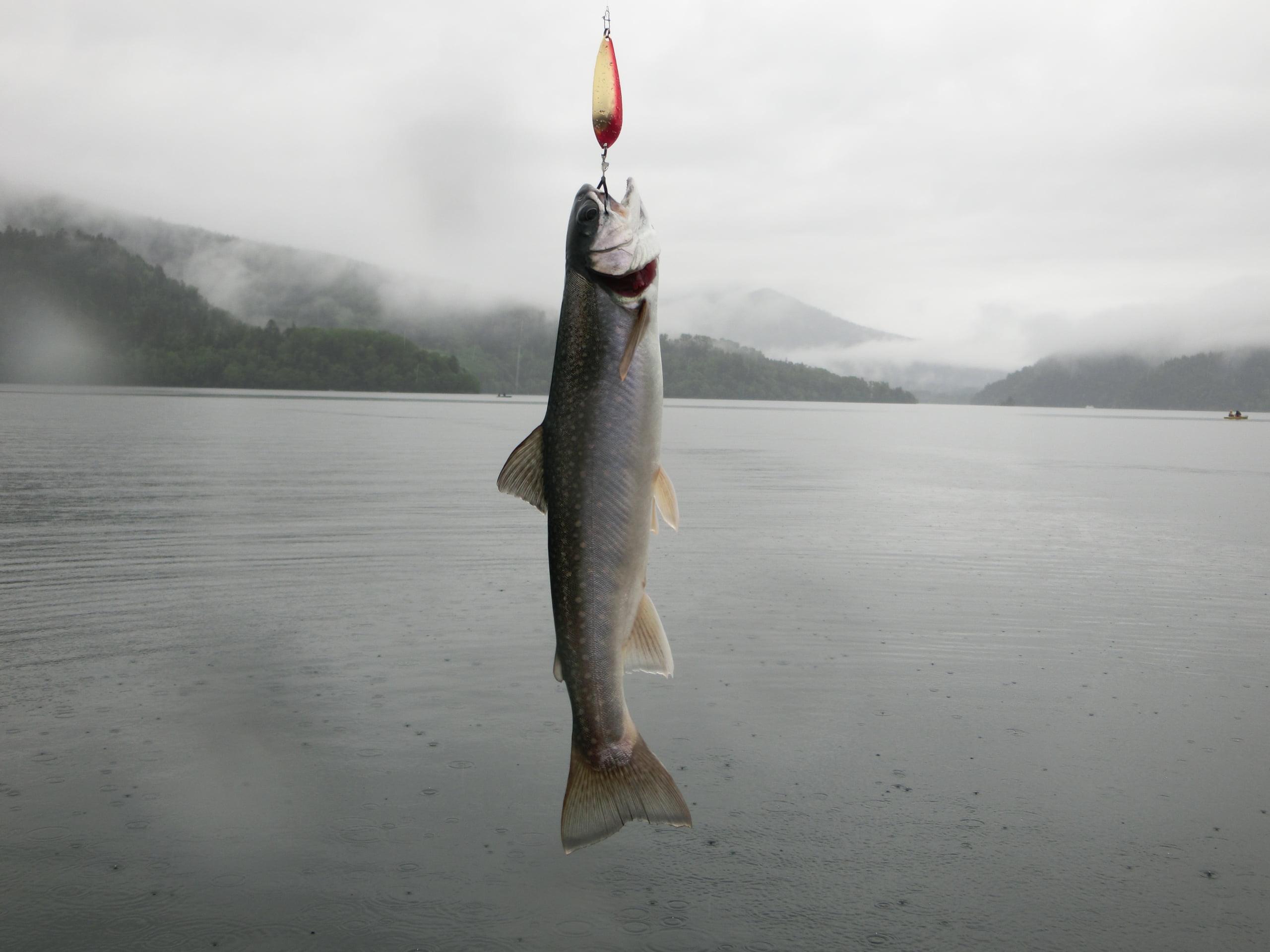 然別湖ミヤベイワナ釣り