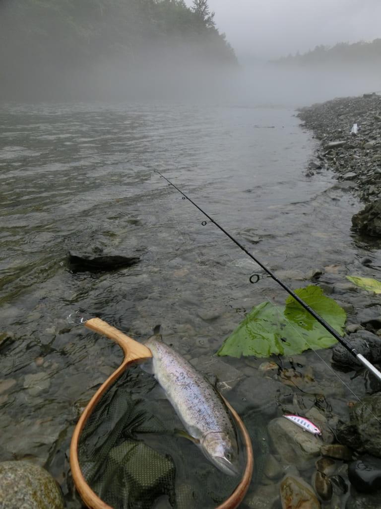 札内川ヤマメ