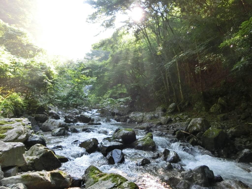 耳川小屋場谷ヤマメ渓流釣り