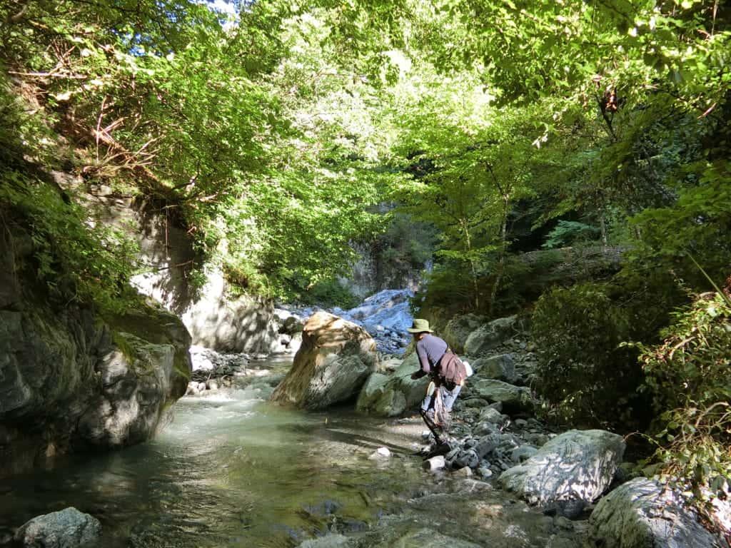 大鹿村小渋川渓流釣り