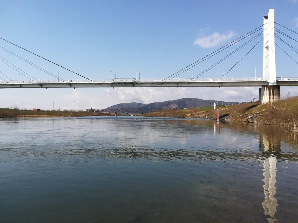 天池橋サクラマス