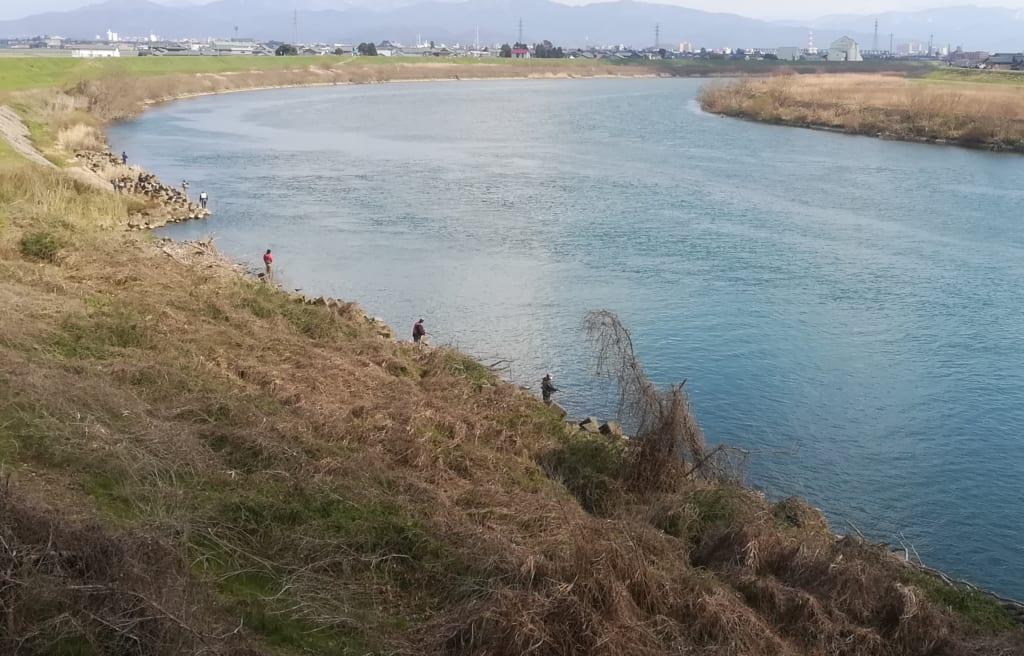 九頭竜川サクラマス釣り