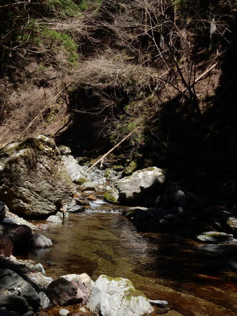 天川村川合アマゴ渓流釣り