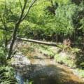 湖北高時川渓流釣り