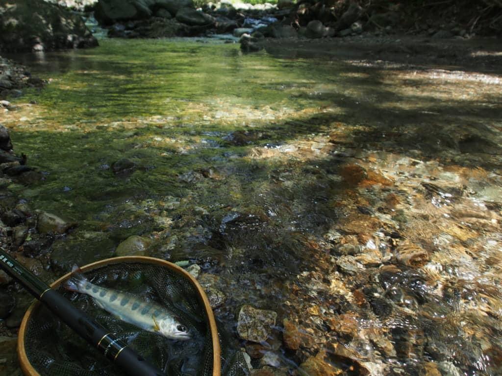 湖北高時川イワナ渓流釣り