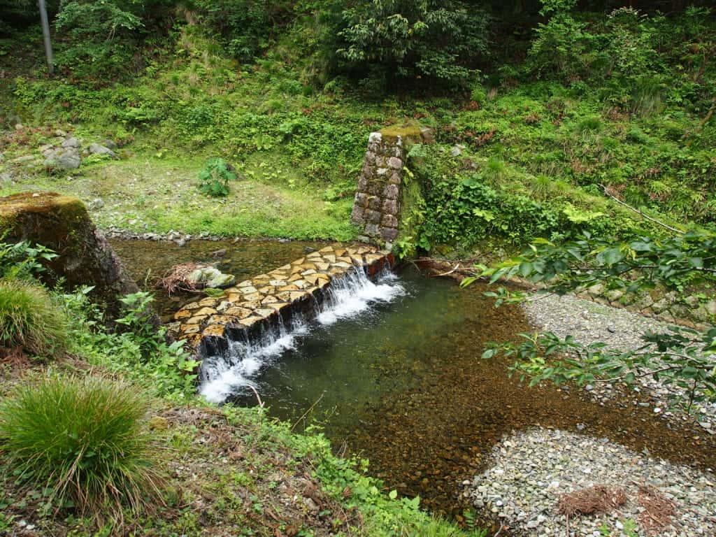 米原市天野川イワナ渓流釣り