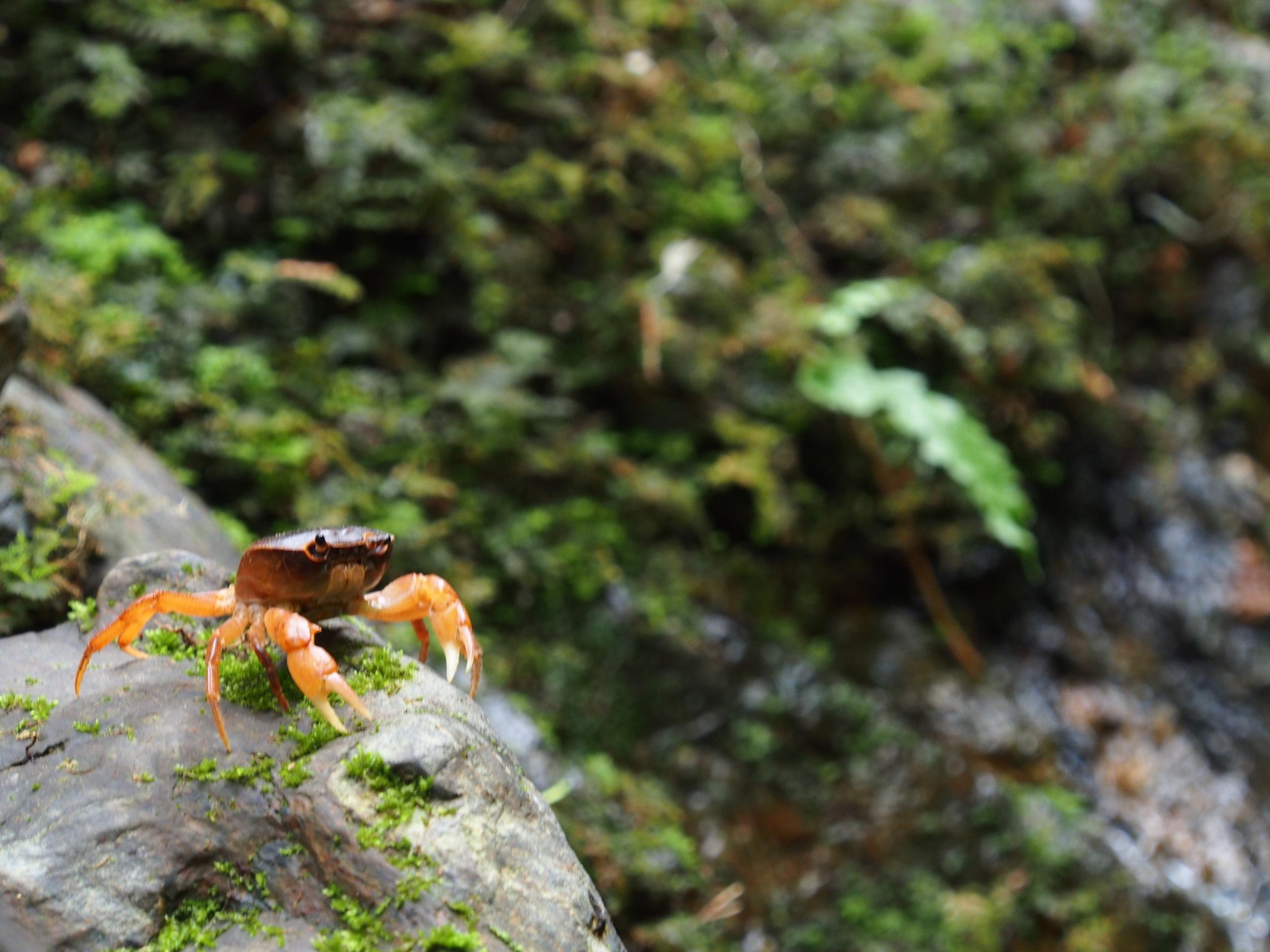 日高川支流の朔日川でアマゴ渓流釣り