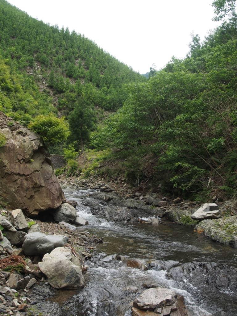 日高川支流のアマゴ渓流釣り