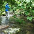 岡山県吉井川ヤマメイワナ(ゴギ)渓流釣り