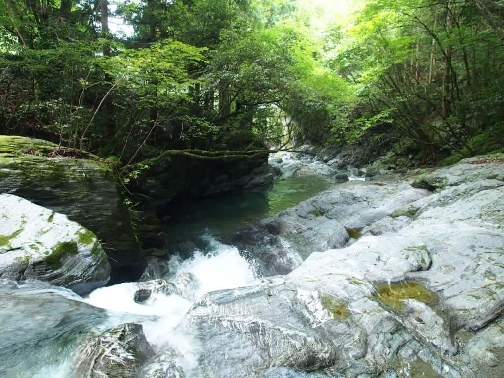 徳島県祖谷渓アマゴ渓流釣り