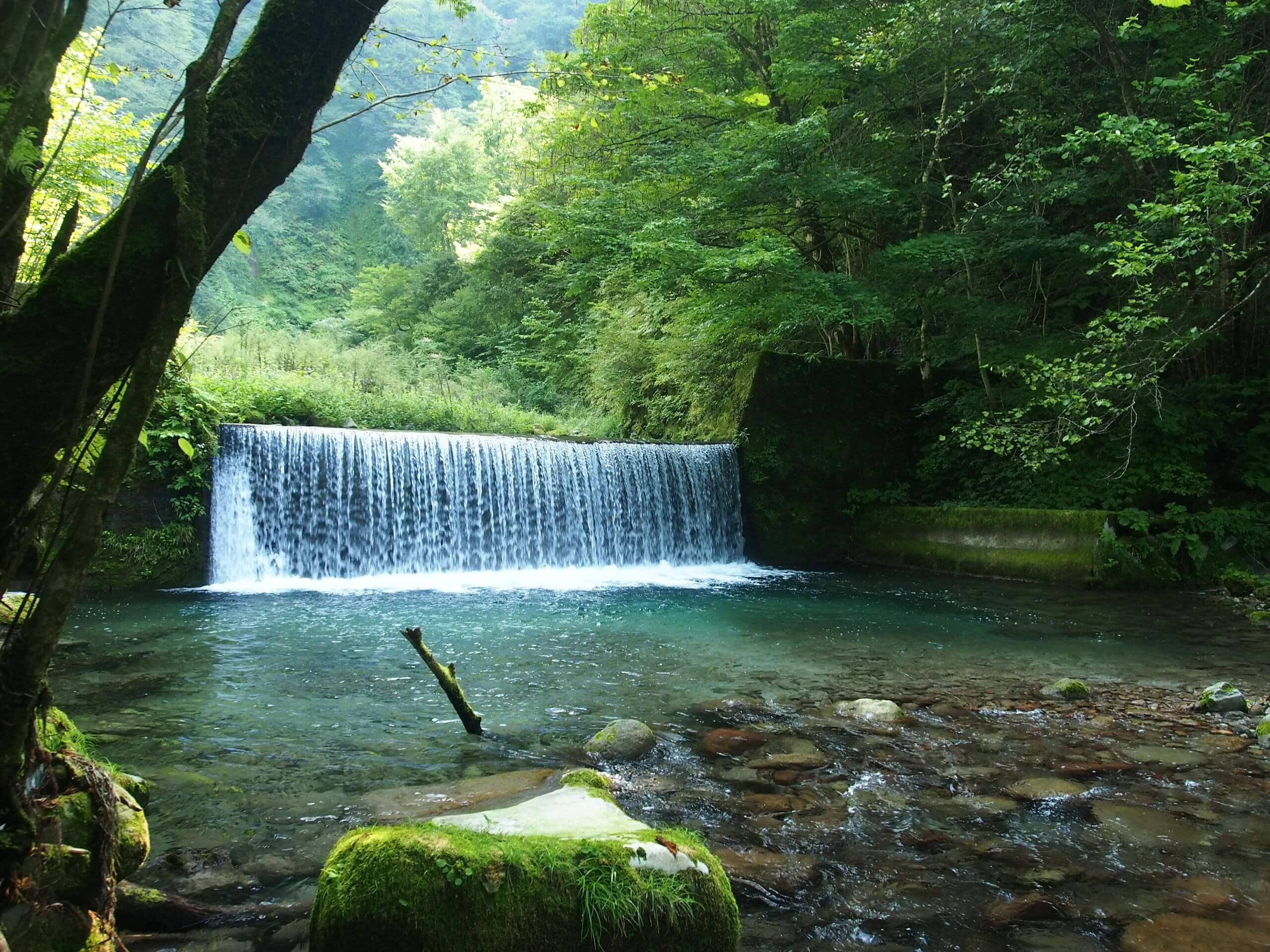 天神川イワナヤマメ渓流釣り