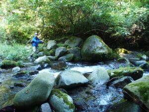鳥取加勢蛇川ヤマメ・イワナ渓流釣り