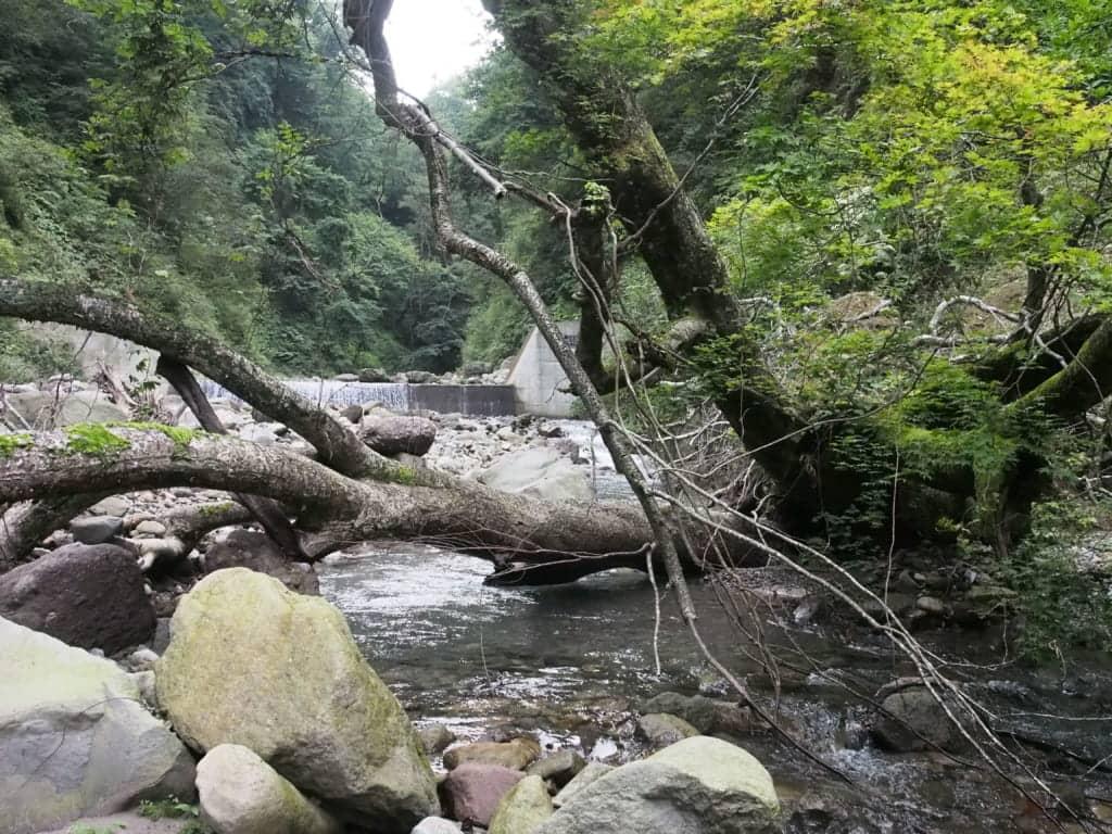 島根鳥取大山ヤマメ渓流釣り