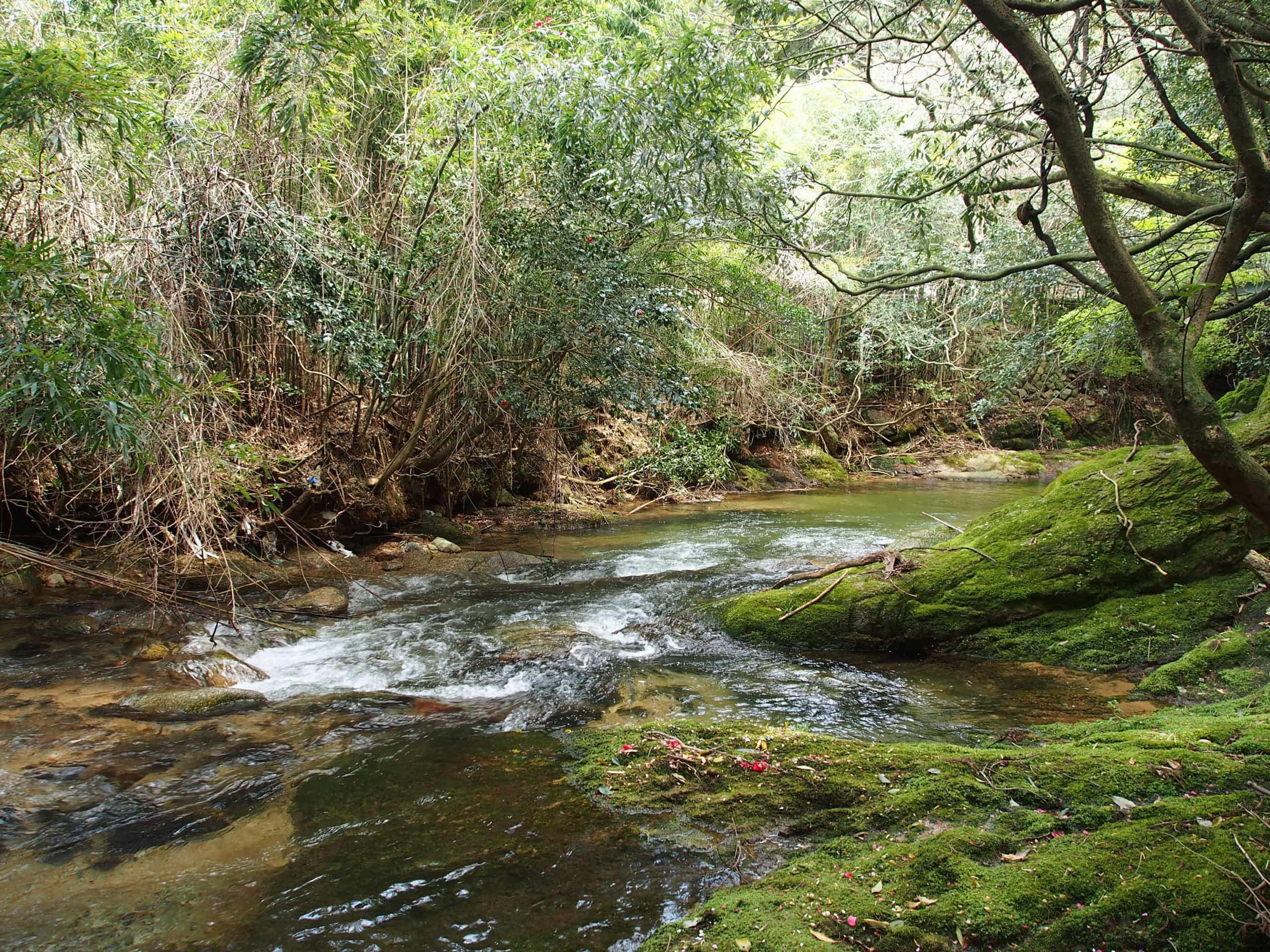 鈴鹿川渓流釣り