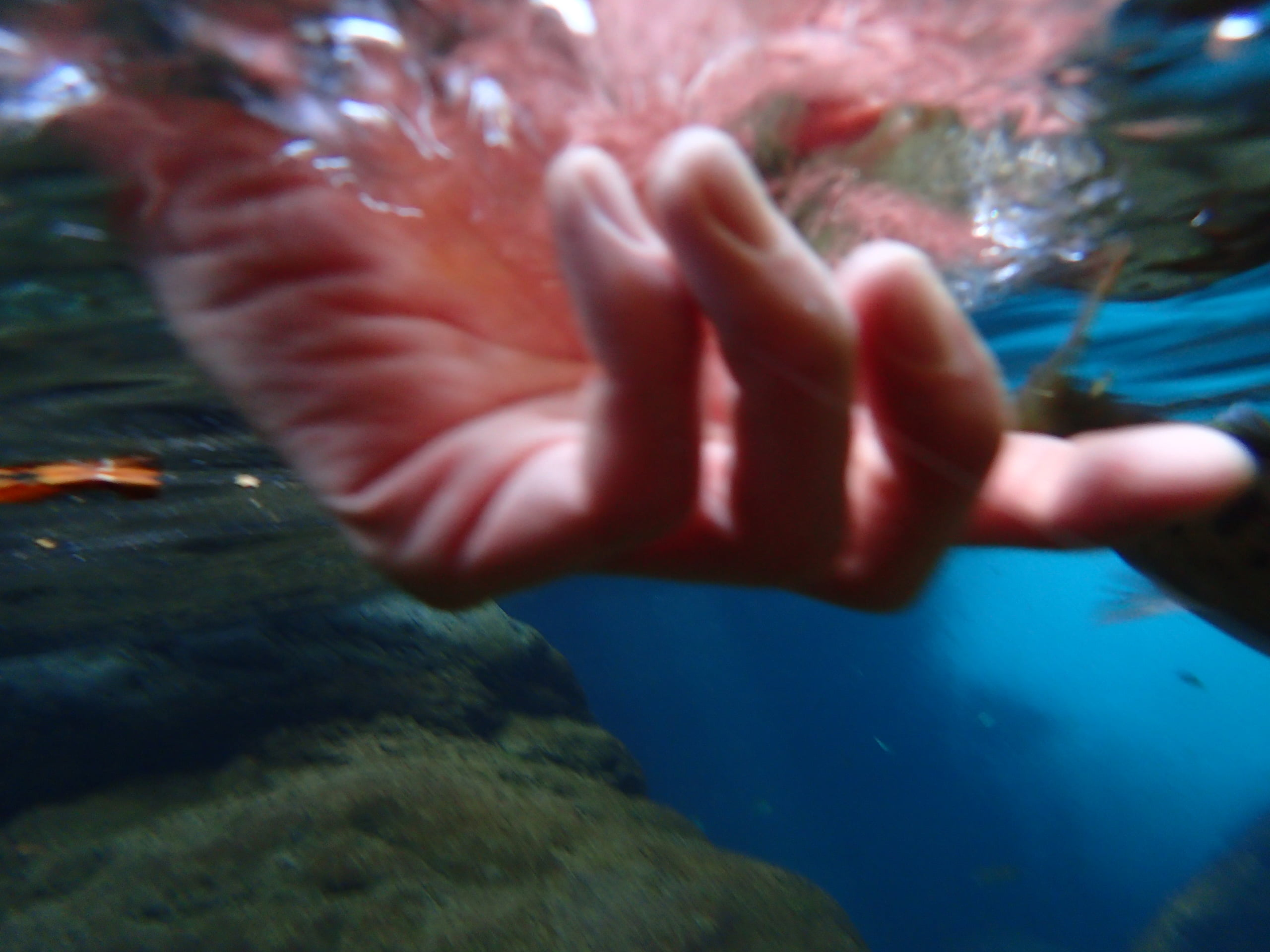 那賀川ヤマメアマゴ渓流釣り