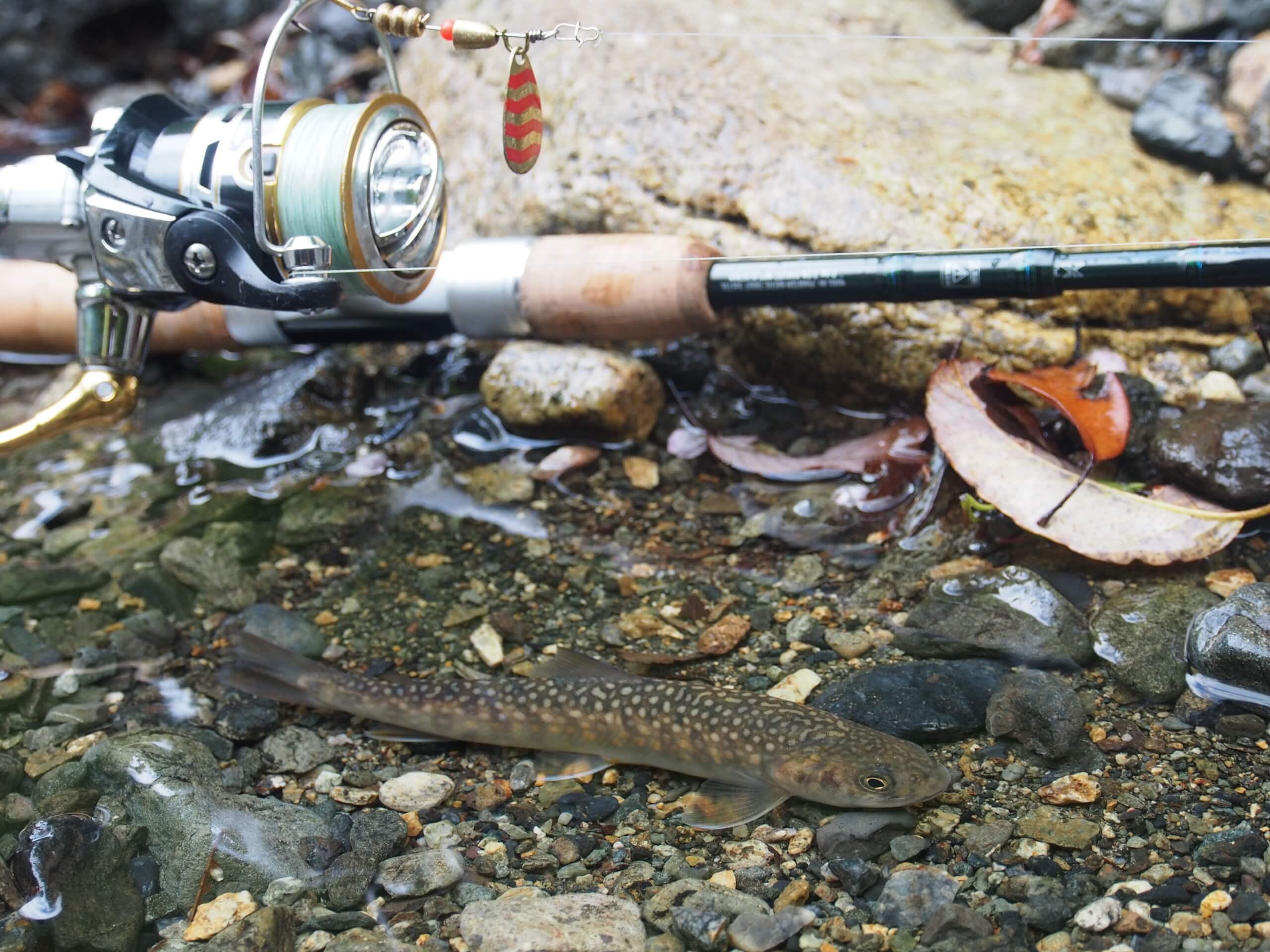 スピナーでイワナ渓流釣り