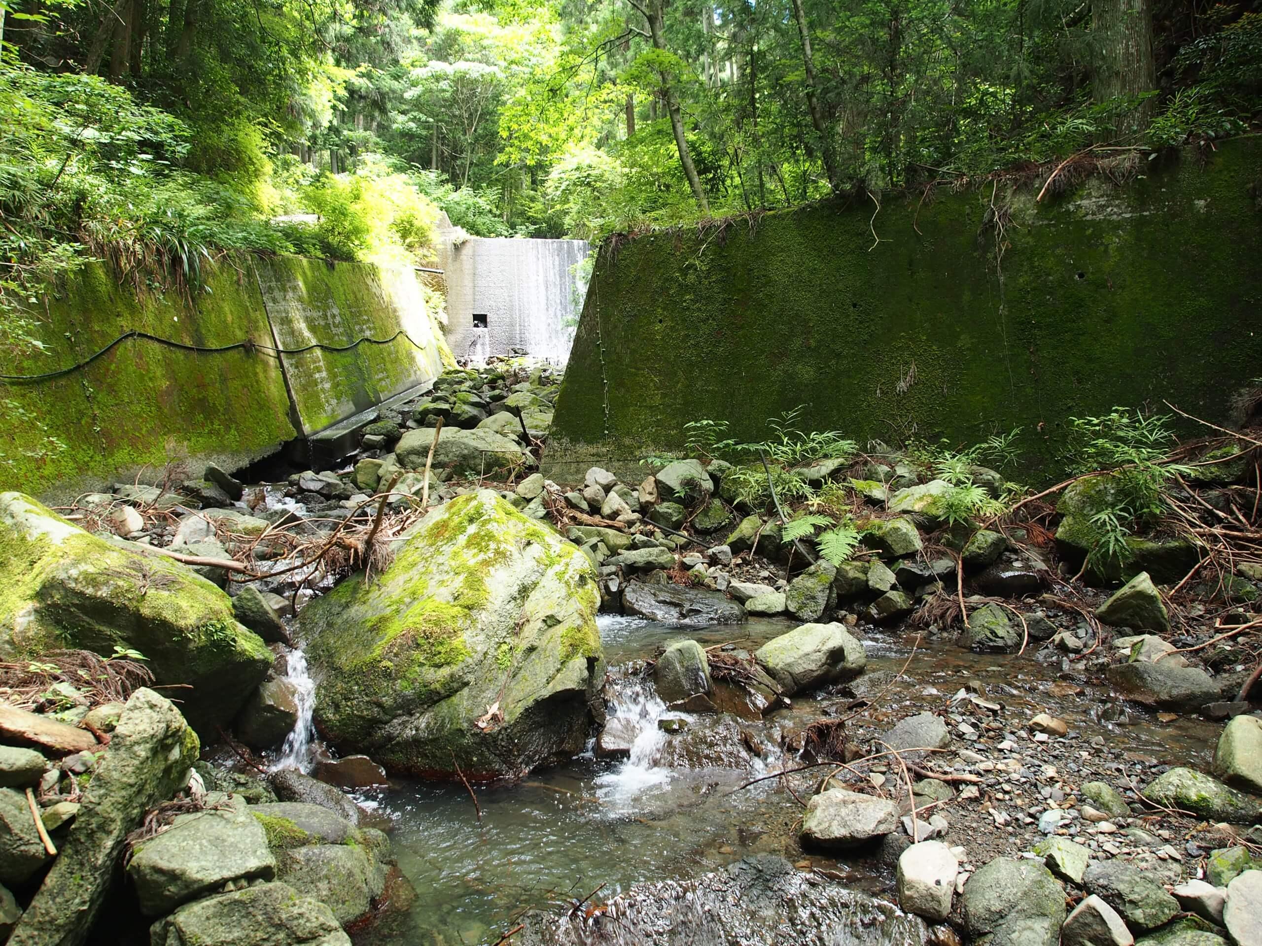 和歌山嵯峨谷川ヤマメ渓流釣り