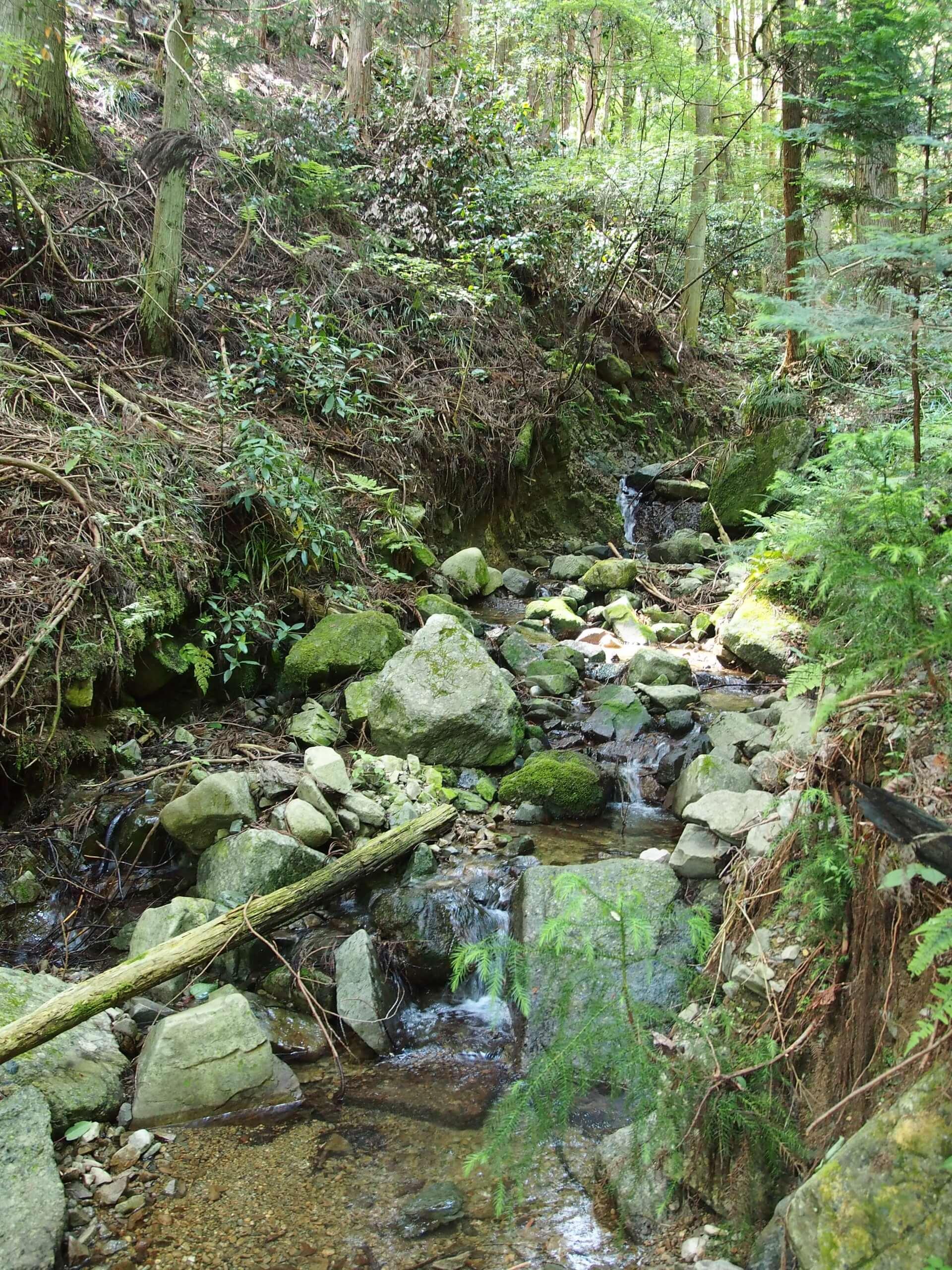 和歌山山田川ヤマメ渓流釣り