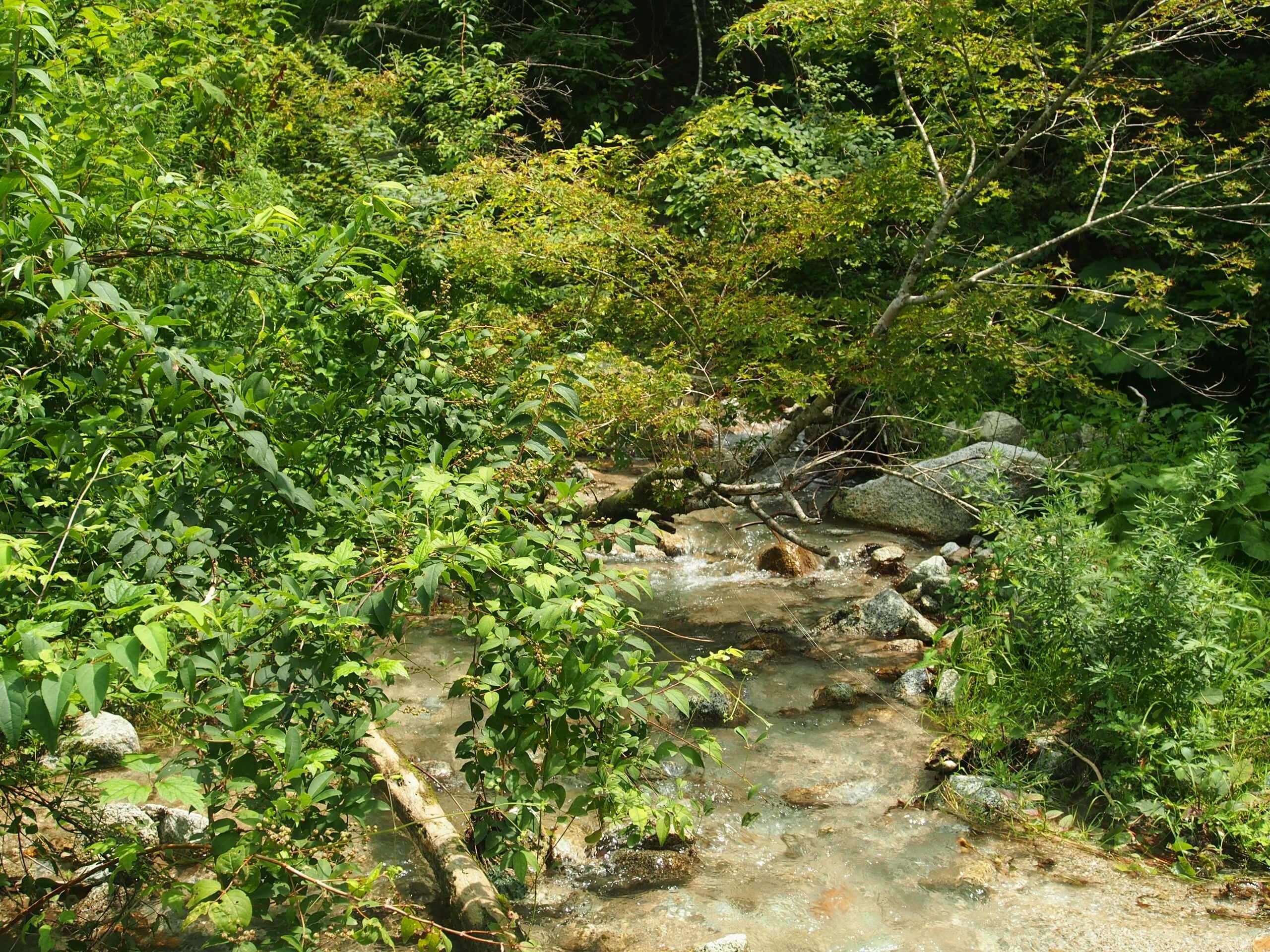 水越川渓流釣り