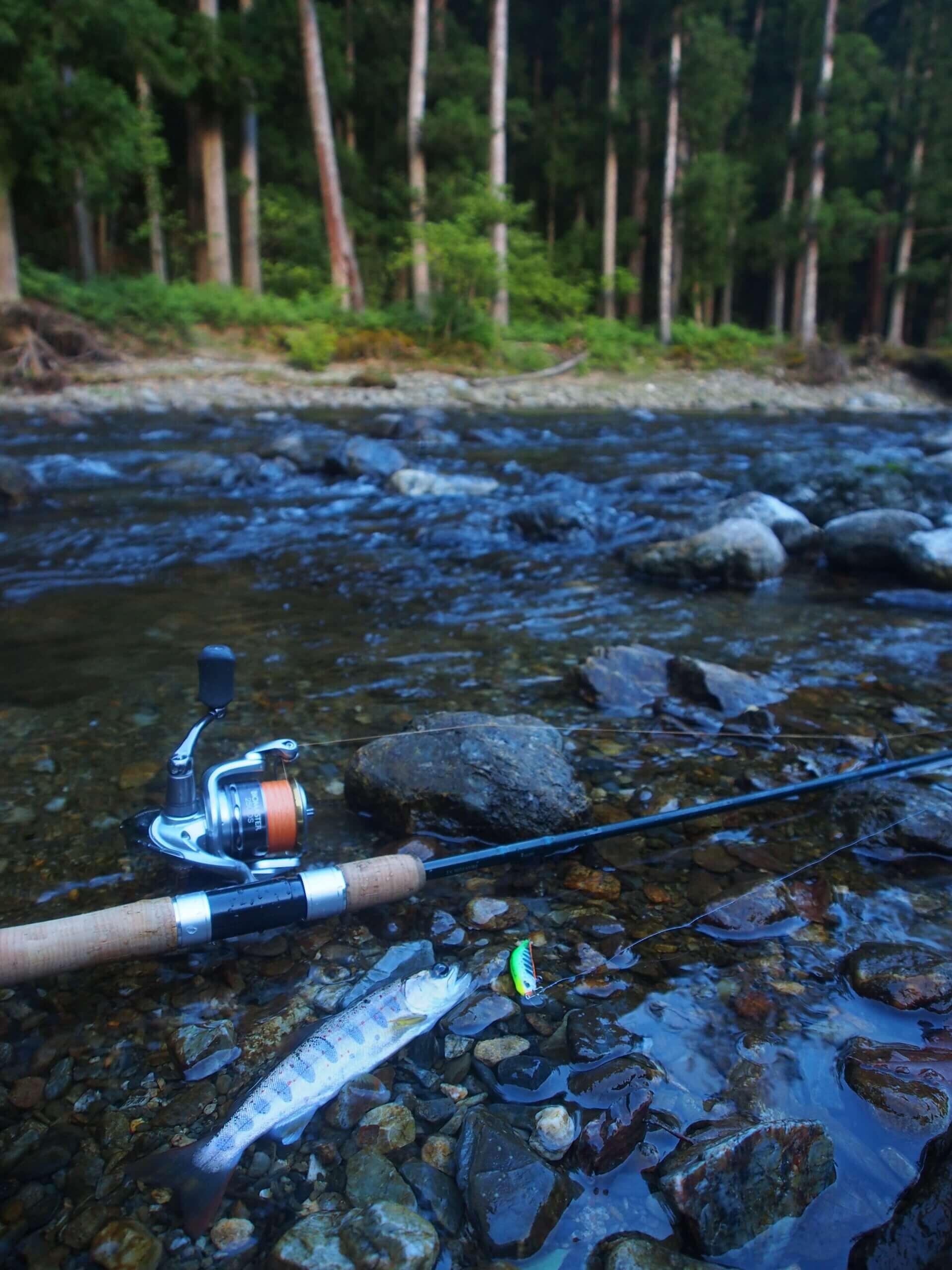 美山由良川アマゴ渓流釣り