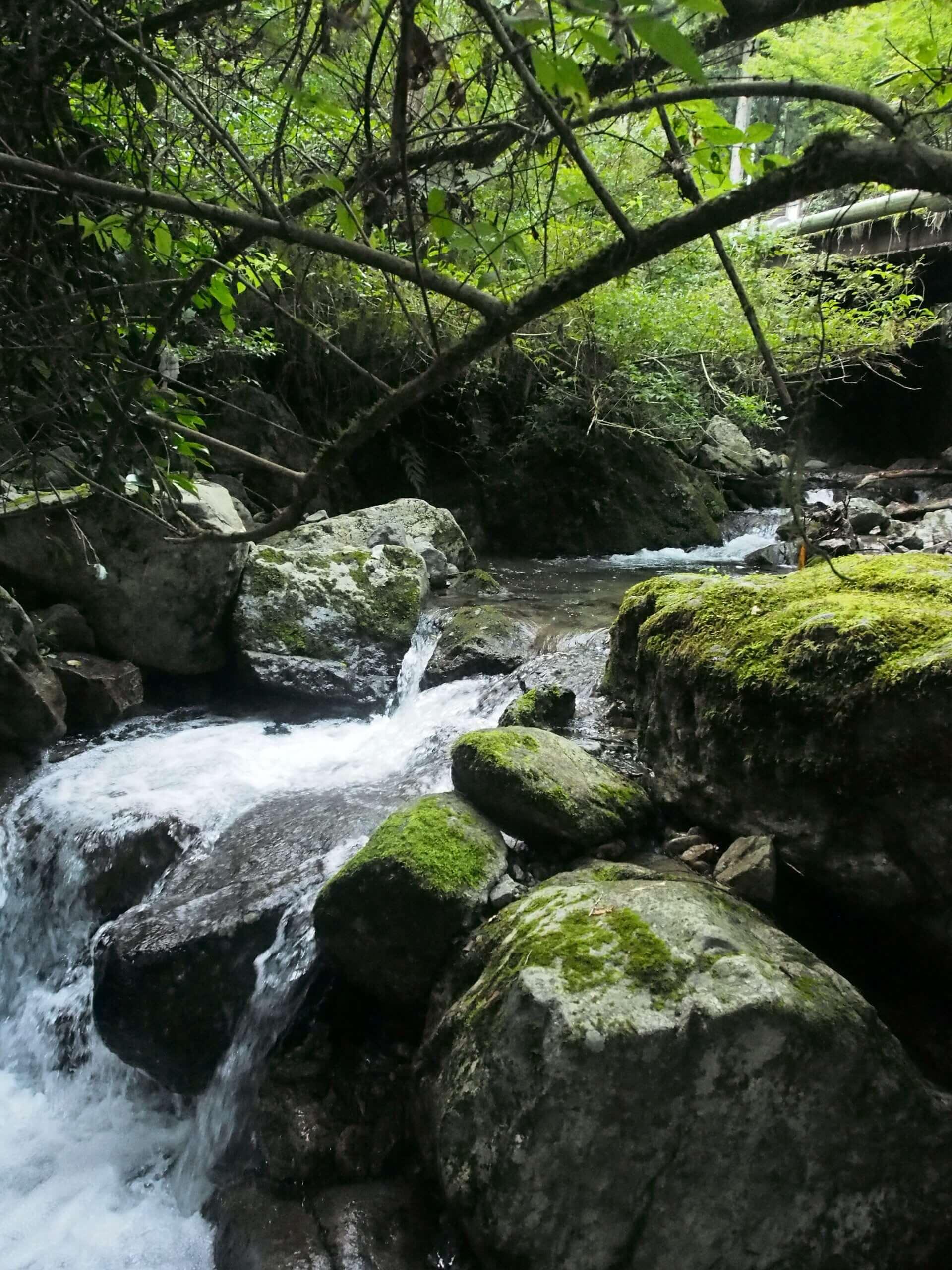 兵庫西部で渓流釣り
