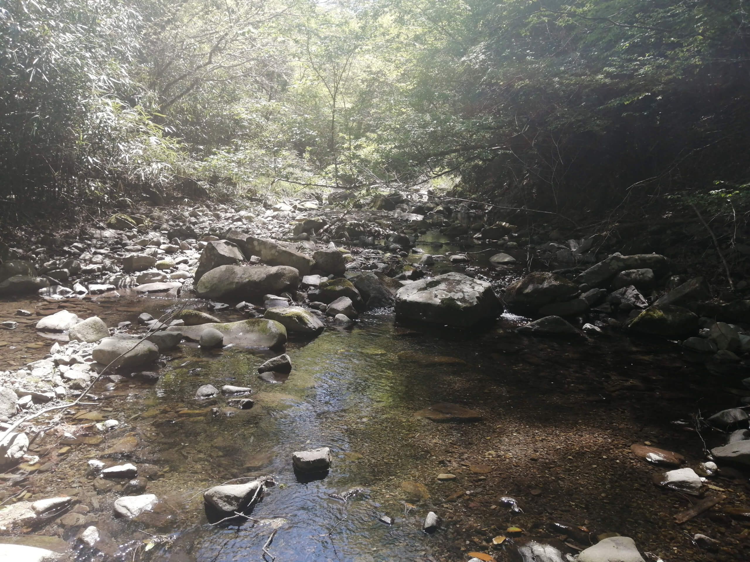 香川内場川アマゴ渓流釣り