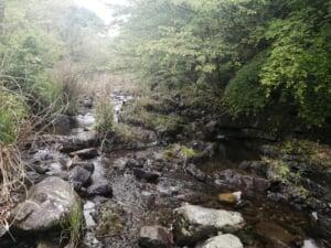 土器川アマゴ渓流釣り