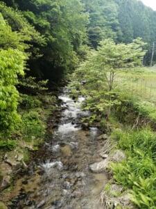 鳥取県千代川支流新見川ヤマメイワナ渓流釣り