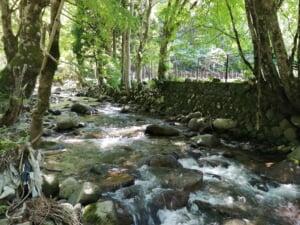 八河谷川ヤマメイワナ渓流釣り