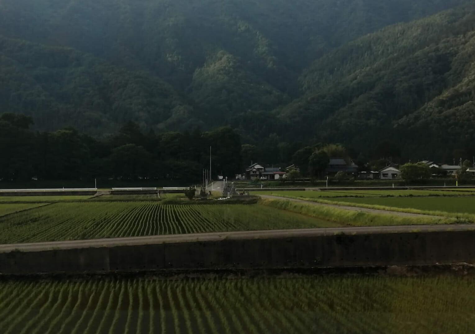 福井のお墓