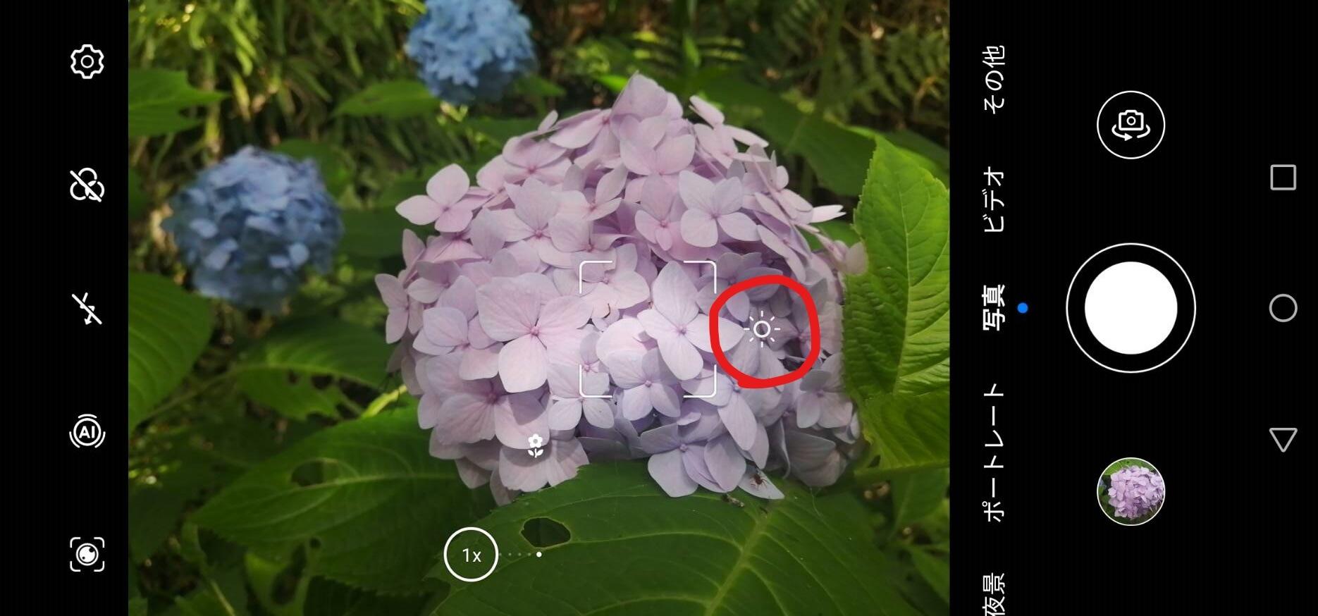 植物の撮影方法