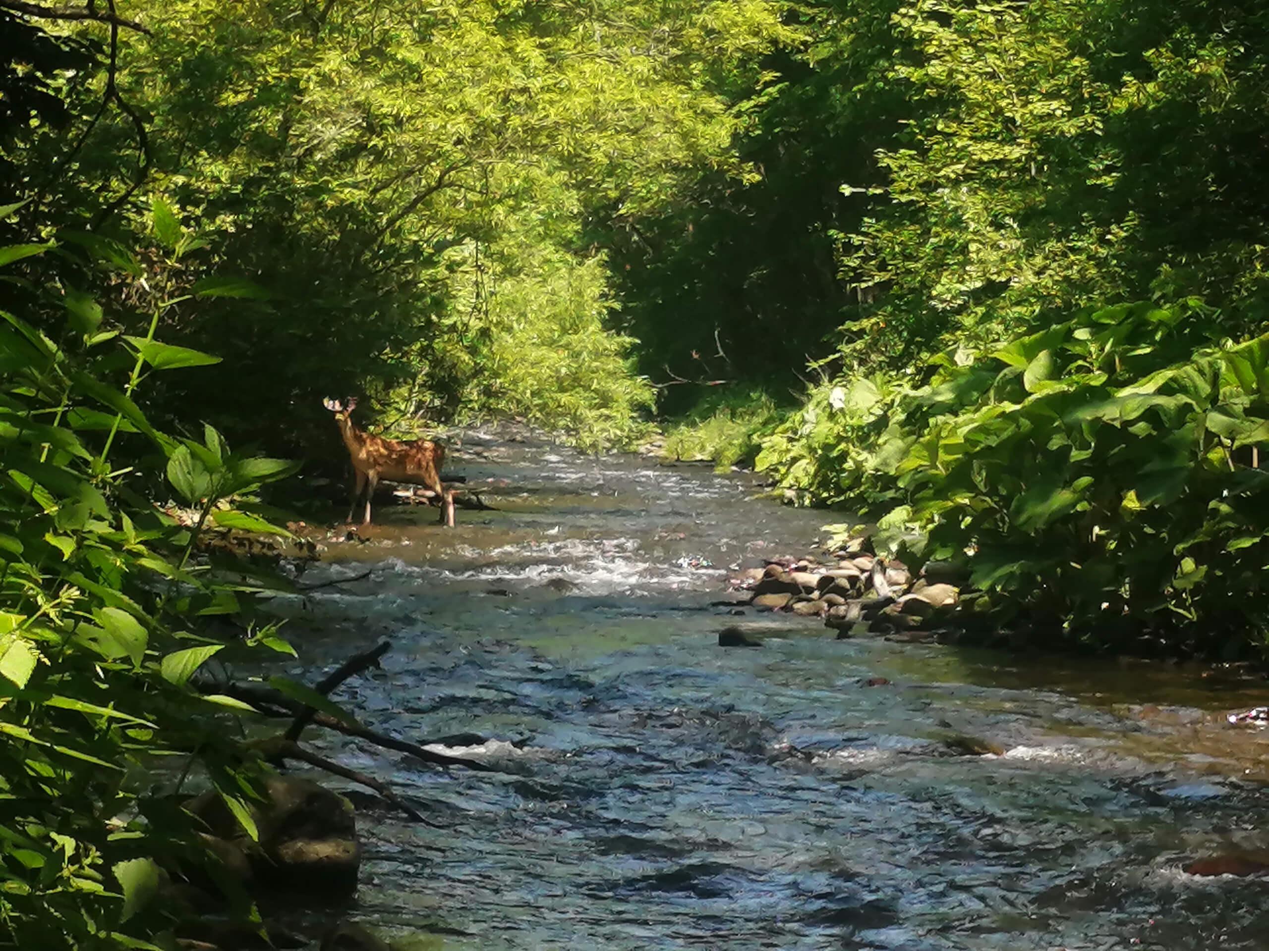 美里別川支流のキトウシ川