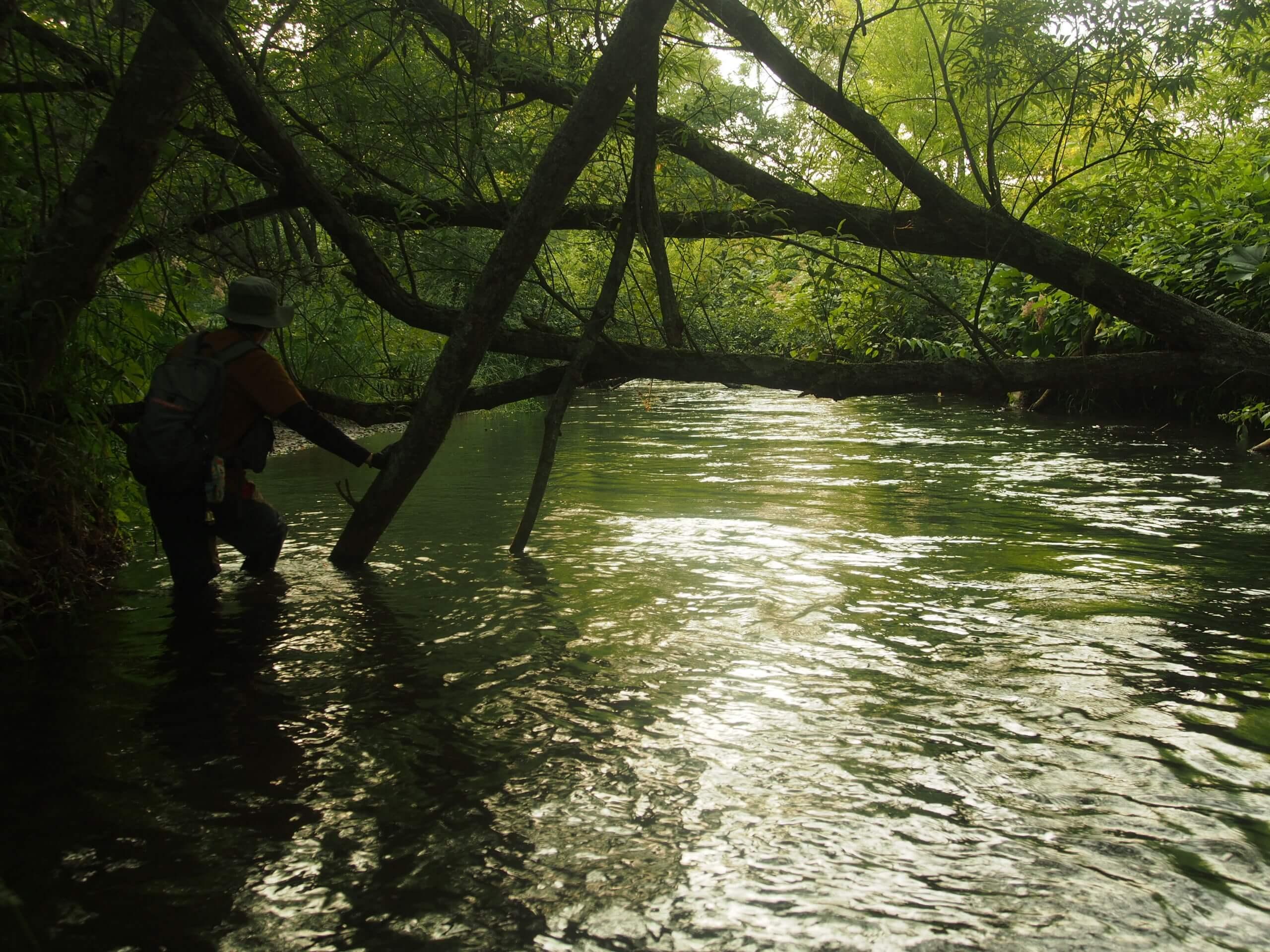 標津川渓流釣り