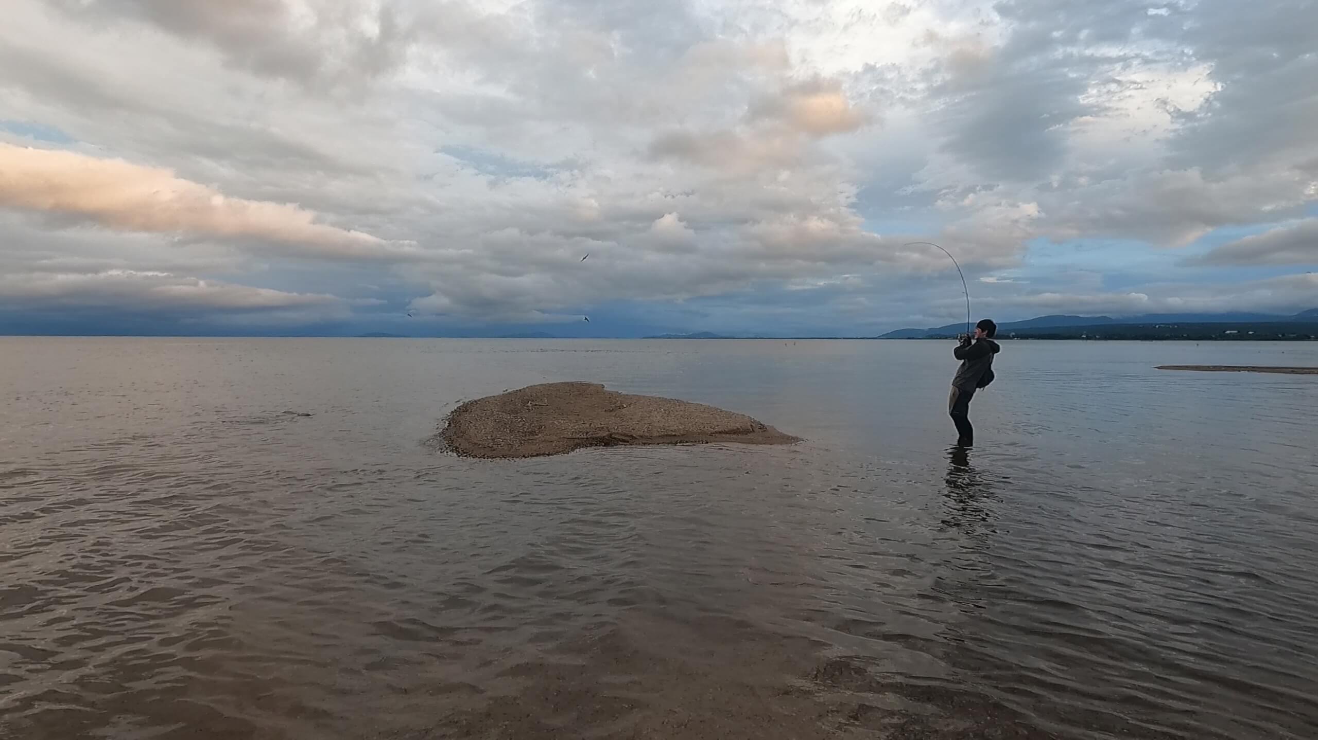 琵琶湖で鯉釣り