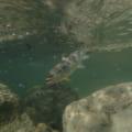 【大阪市から2時間でヤマメ渓流釣り】十津川・熊野川でアマゴ釣り
